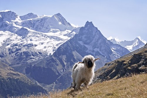 Le Zinalrothorn