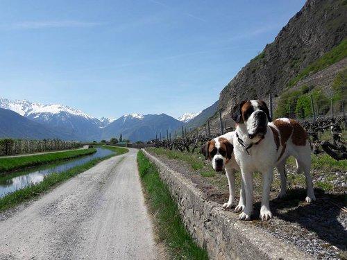 Le voyage en Valais