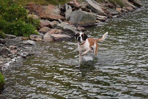 A'perro (Apollon de l'Orée des Montagnes)