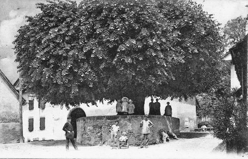 Bonvillars Le Tilleul