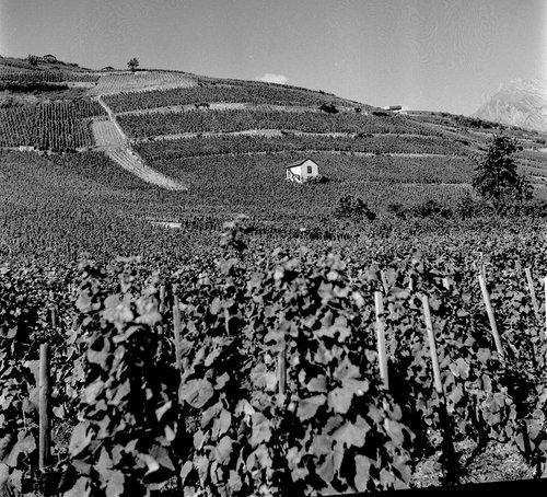 Vignoble de Champmarais