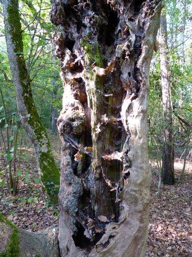 Un arbre mort, un lieu de vie!