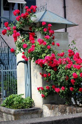 La fontaine et le rosier
