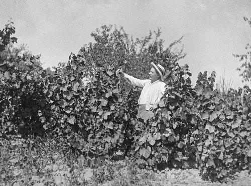 Vive la vigne