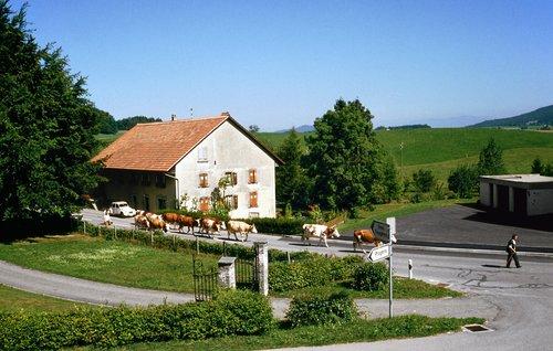 Armailli Grandchamp, La Verrerie
