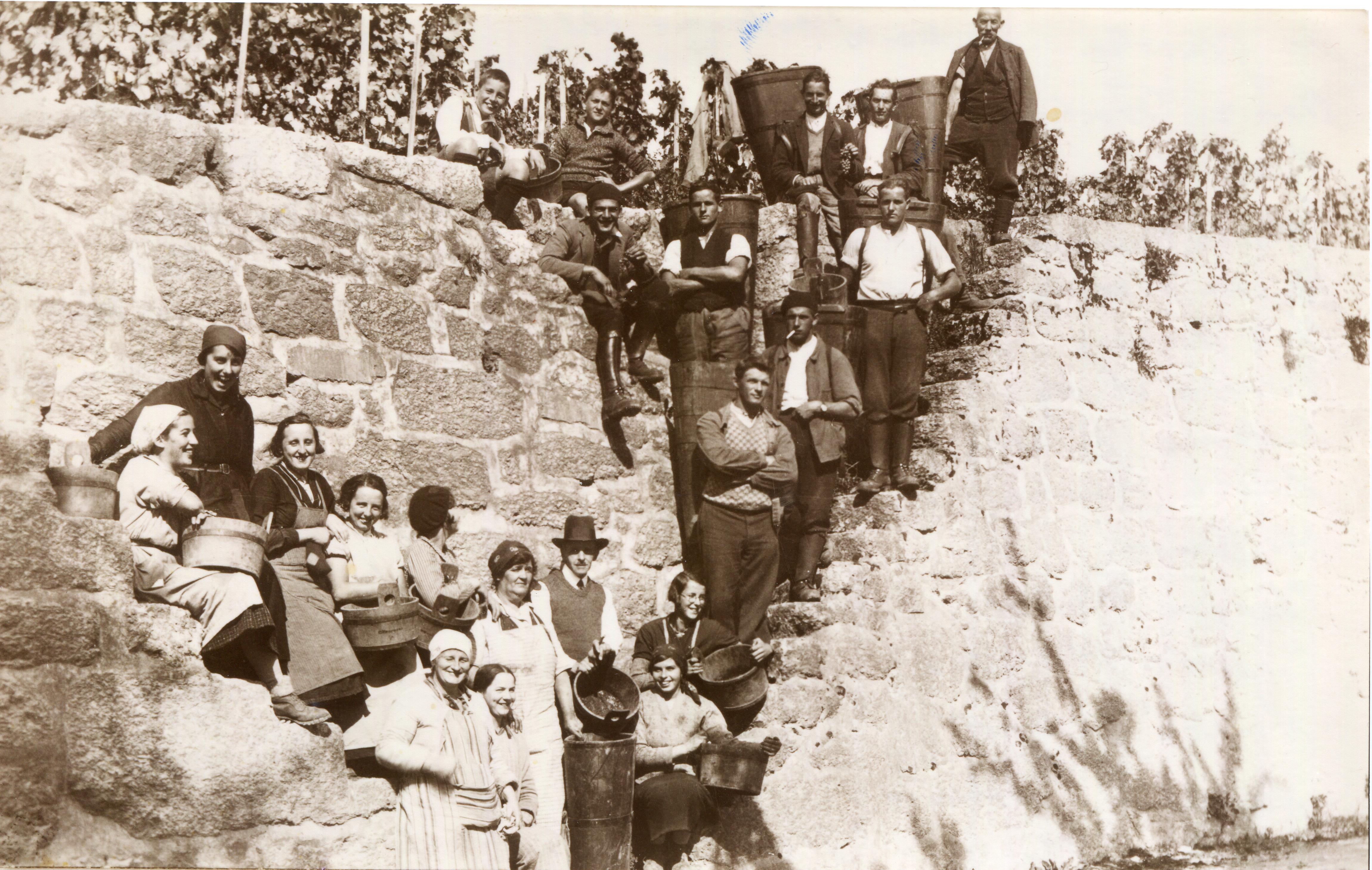 Vendanges 1935.