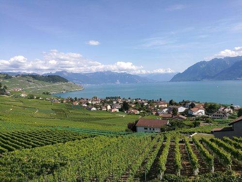 Vignobles du Lavaux