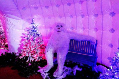 Noël pour les solitaires