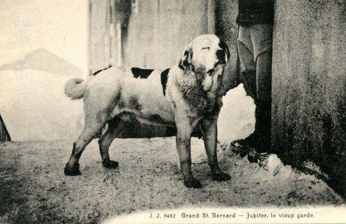 L'étrange chien au Grand-St-Bernard