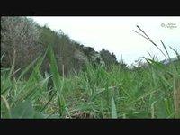 Montorge 2012 - Flore de printemps - Orchidées!