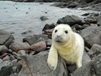 Amazing wildlife at John O' Groats, North Highlands