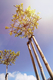 Paal rond gefreesd | D6 | Vuren | 125 cm