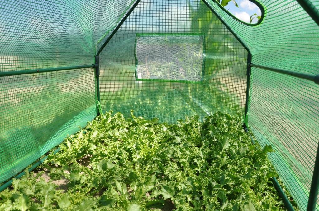 Royal Well | Foliekas Corn Salad