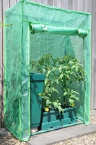 Royal Well | Foliekas Roma Tomato