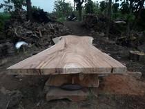 Suar boomstam tafelblad |  90 x 200 cm