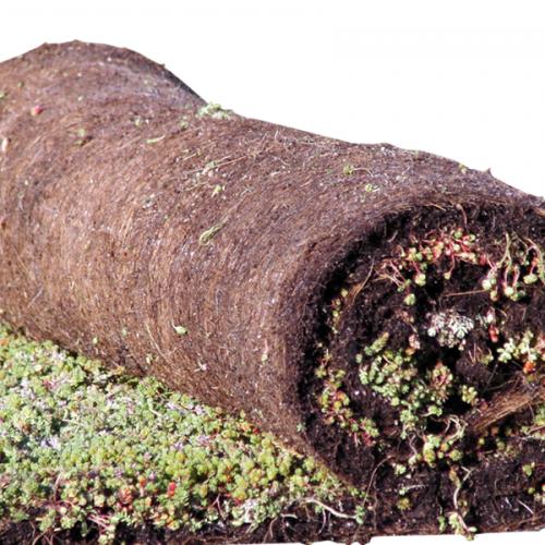 Aquaplan | Groen Dak Sedum Beplanting | Rol