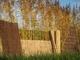 Westwood | Rietmat Tonkin | 100 x 500 cm