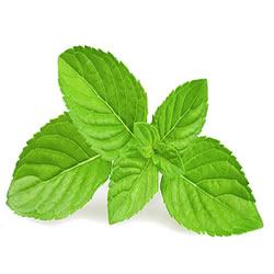 Eliquid menthol flavour