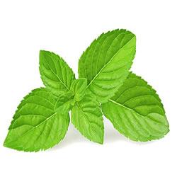 Eliquid Spearmint flavour