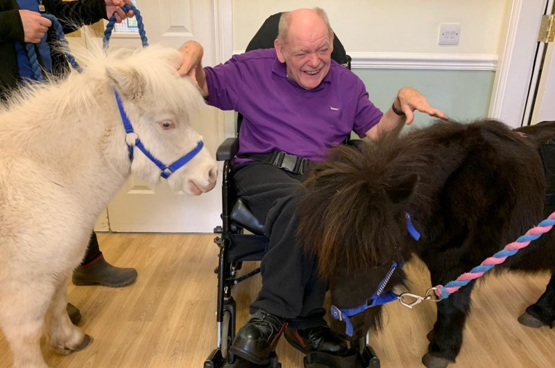 Sadlers' pony pals