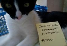 Athens cat 2 320