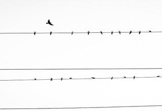 Birdpower400