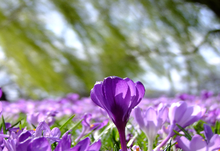 Flowers400