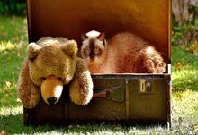 Teddy 2442128 1920