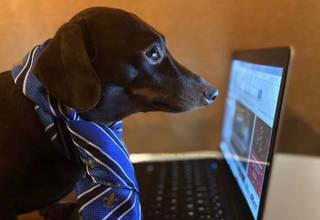 Dog laptop