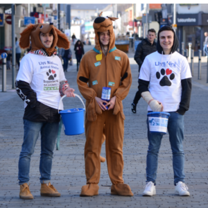 Animal volunteering swansea