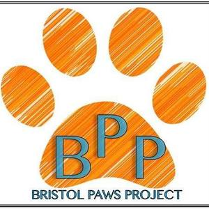 Bristol Paws Project: vets for disadvantaged pets
