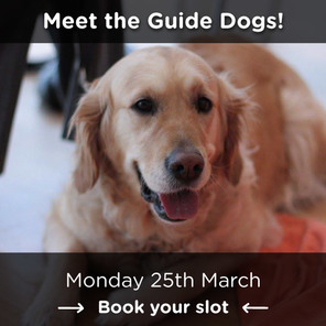 Guide dogs web header