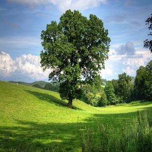 Tree 402953 640