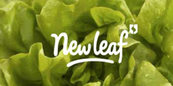 New leaf menu
