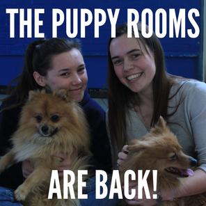Puppyroomsback1