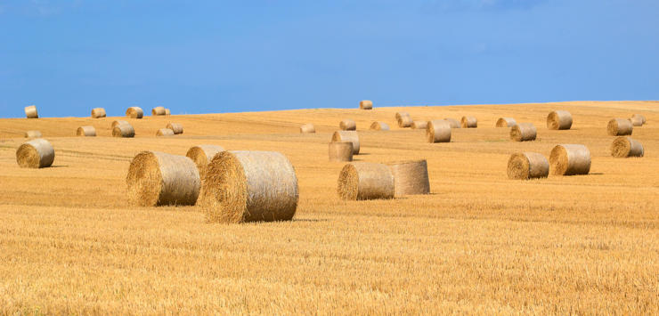 Image of field of harvested hay bails