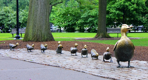 Ma_Boston_commons_ducks4e