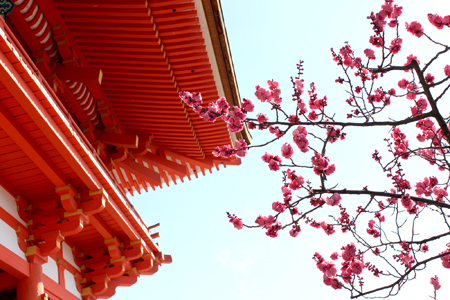 japan-temple-cherry-blossom