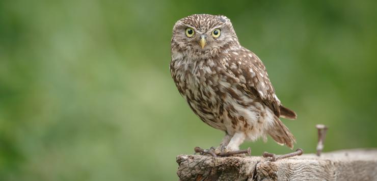Owl sitting on post