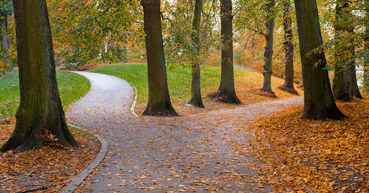 Two paths diverging in an autumn forest