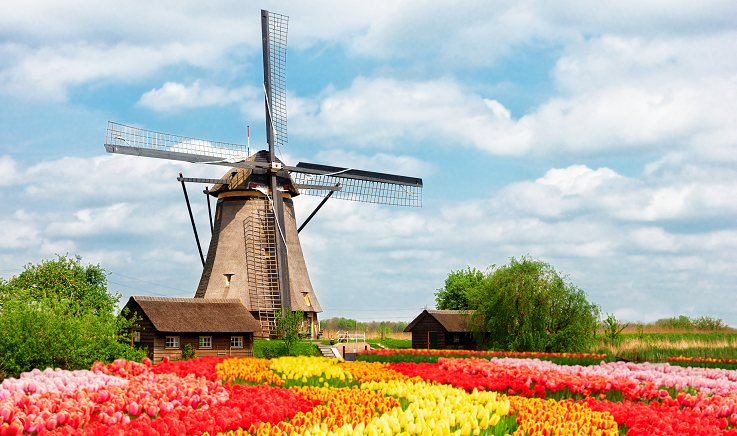 Windmill with tulips in foreground