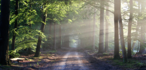 path-in-trees-forest-sunlight