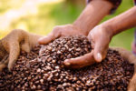 Transparency: as crucial for coffee as for investments