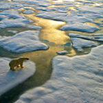 Special Report: Climate risks and consequences