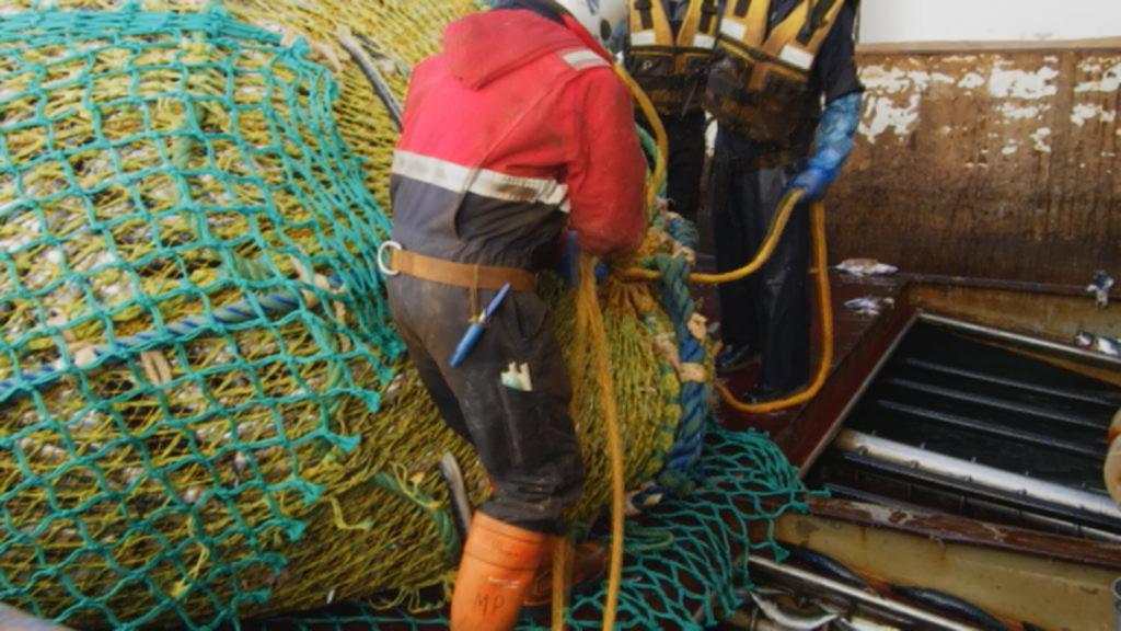 Landskassen har mistet makrelafgift