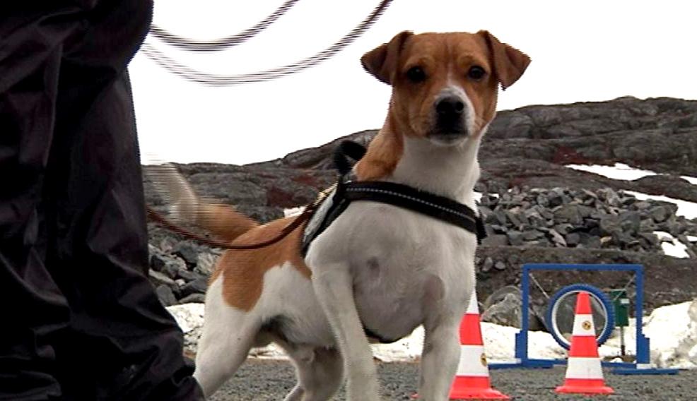 Udlicitering af hundefangerfunktion