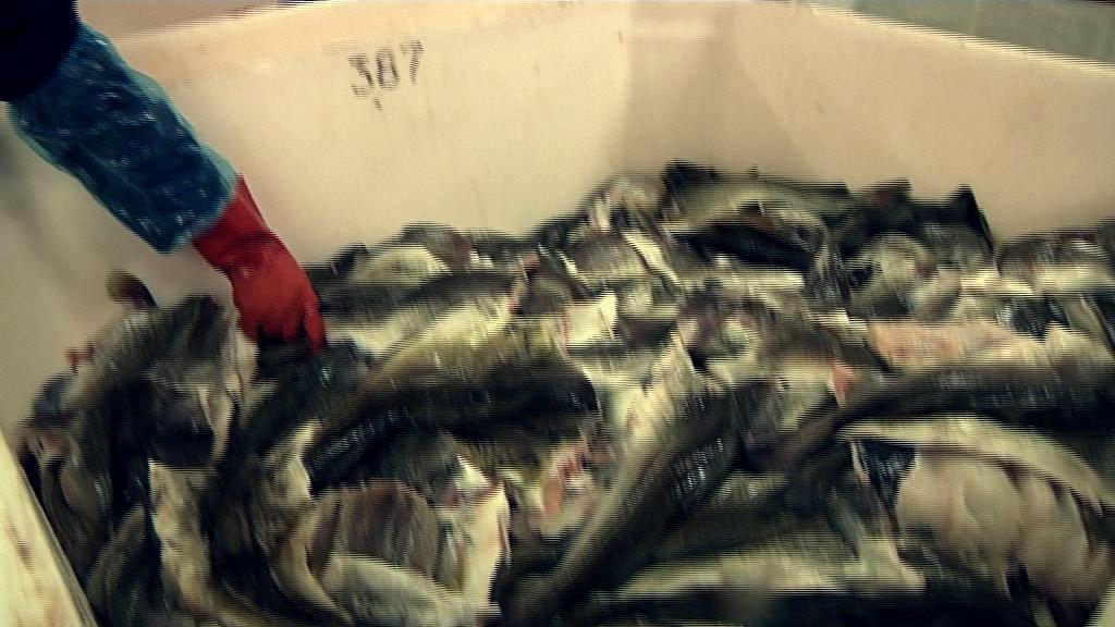 Fiskepriser i himmelflugt