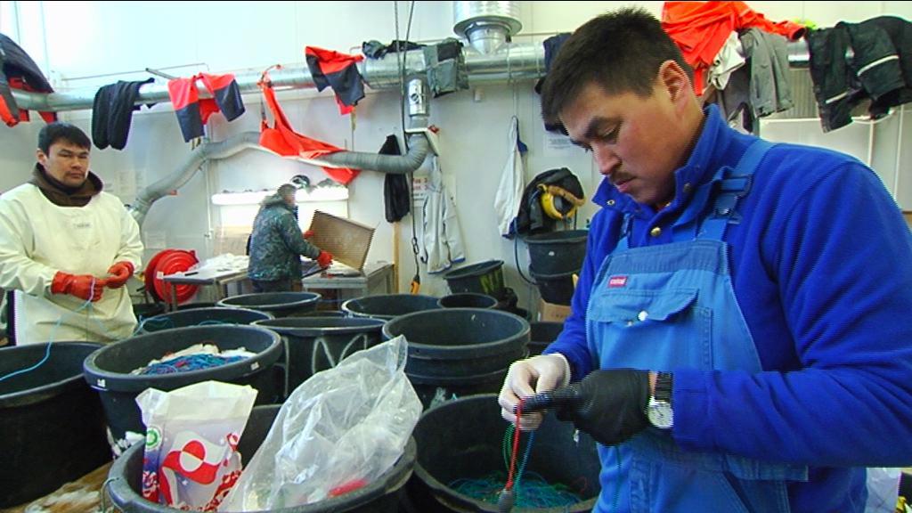 Fisker- og Fangeruddannelsen til Paamiut