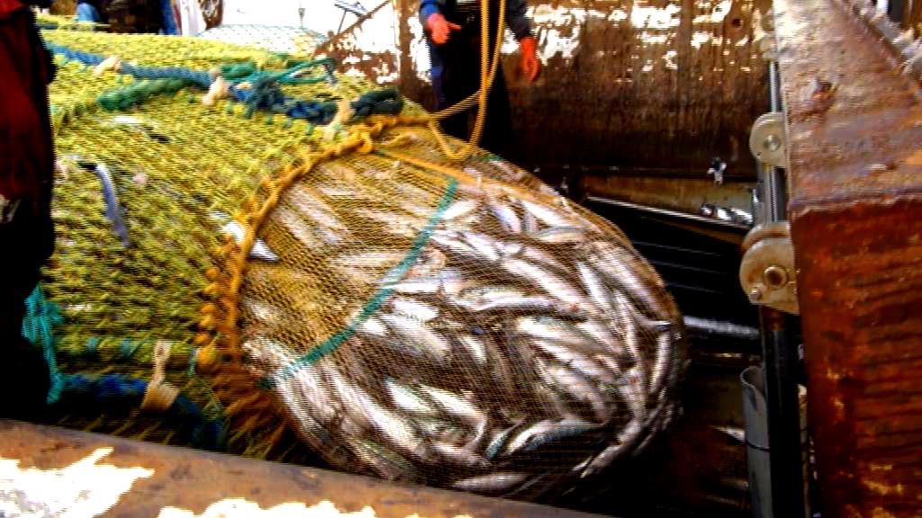 Fiskeeventyr