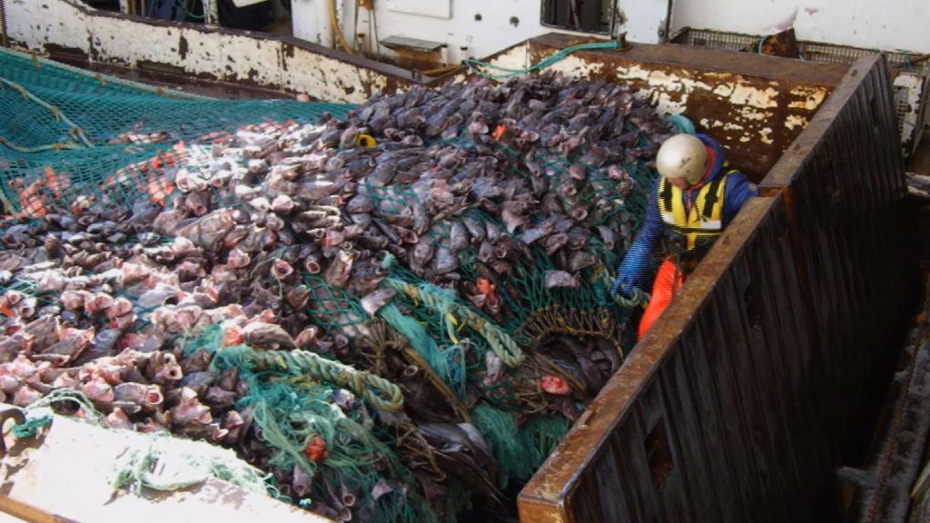 Fiskeriets år